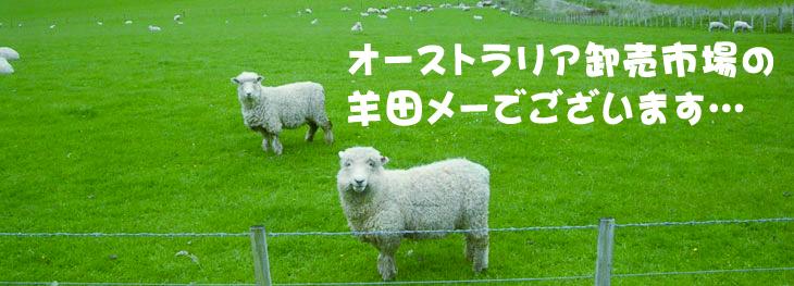 オーストラリア卸売市場の羊田メーでございます…。