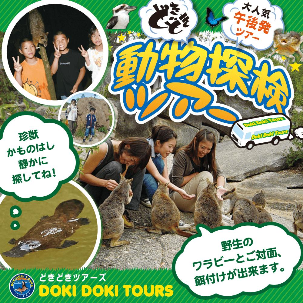 DOKI DOKI TOURS どきどきツアーズ キュランダ マリーバ トルガ 動物探検ツアー