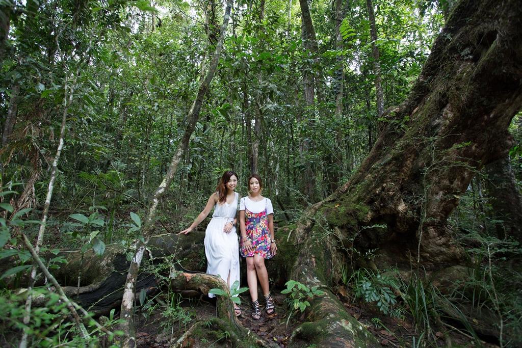 <p>さすがの世界遺産。その圧倒される大自然に身を置いて、日本では体験できない太古の森の声を聴いてみましょう。また先住民アボリジニ文化に触れ合う貴重な経験が出来るのもモスマン渓谷での醍醐味。</p>