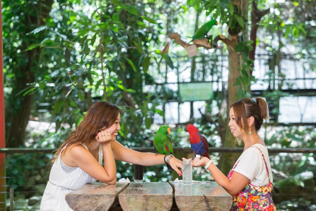 <p>12:00、ワイルドライフハビタットへ移動。園内のレストランにてプレートランチ。鳥のさえずりを聞きながら優雅なランチタイム。3つのメニューから選択できます。</p> <p>※動物園の入園は含まれません。</p>