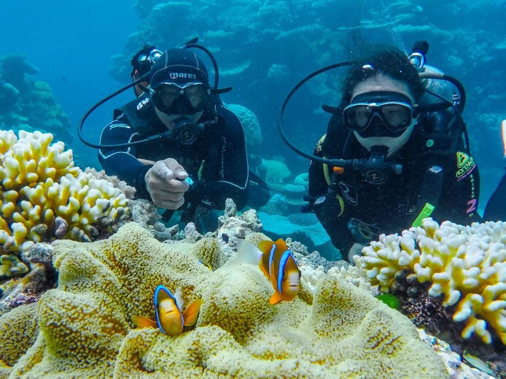 <p>GBRの固有種、バリアリーフアネモネフィッシュ。固有種が多いのもGBRの特徴。そんな生物を逃さず教えてくるのが、海の知識が豊富なインストラクターたち。その日の海況や透明度に合わせてガイディングも変えるというプロフェッショナルさ。</p>