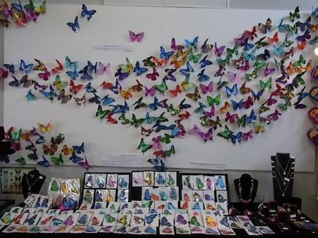 <p>ユリシス蝶は美しい瑠璃色が特徴の大きな蝶々で、 ケアンズ近郊で見ることができます。 この蝶を見ると「幸せになれる」といわれているんですよ!</p>