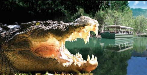 <p>もちろん、クロコダイルの餌付けショーはMUST。体長3m近くある巨体が水からジャンプ!!目の前で見ることが出来るので迫力倍増です。</p>
