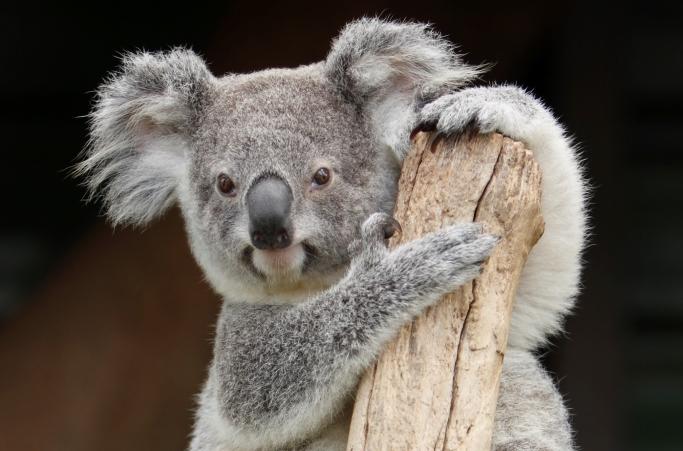 <p>学生一人一人のニーズに合わせ、フレキシブルに対応しますので、個々の教育プログラムを組むことが可能です。</p> <p>オーストラリア各地にキャンパスがありますので、お好きな都市で人間力・自立心を磨いてみませんか?</p>