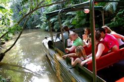 <p>・アーミーダック熱帯雨林ツアー レインフォレステーションだけのユニークな体験!-第二次世界大戦時に製造された水陸両用車アーミーダック(正式名称DUKW)に乗り込み熱帯雨林探検へ。ツアー中にはシダ、ラン、絞め殺しのイチジク、スティンギング・ツリー等の植物や美しいカワセミをはじめとする鳥類、哺乳類、爬虫類などこの熱帯雨林特有の動植物にめぐりあうことでしょう。</p>