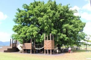 <p>カフェの目の前にある子供達に大人気のツリーハウス。</p>