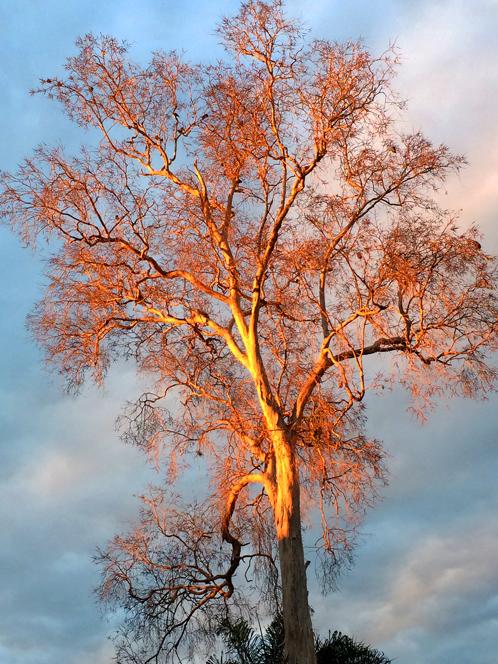 枯れ木が紅葉!?