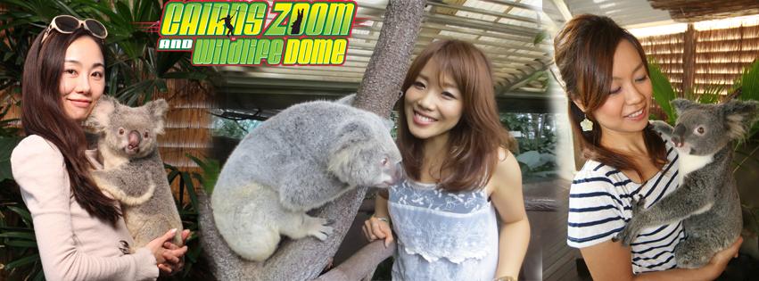 ケアンズ市内でコアラを抱っこして写を撮ろう!