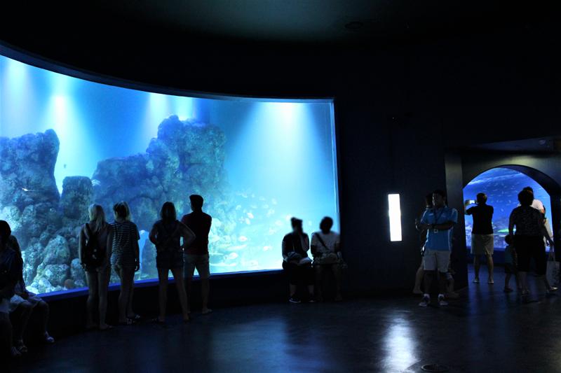 <p>専門家によるトークセッションや</p> <p>子供に人気の陸上の生き物や海の中の生物と触れ合えるタッチタンクも!!</p>