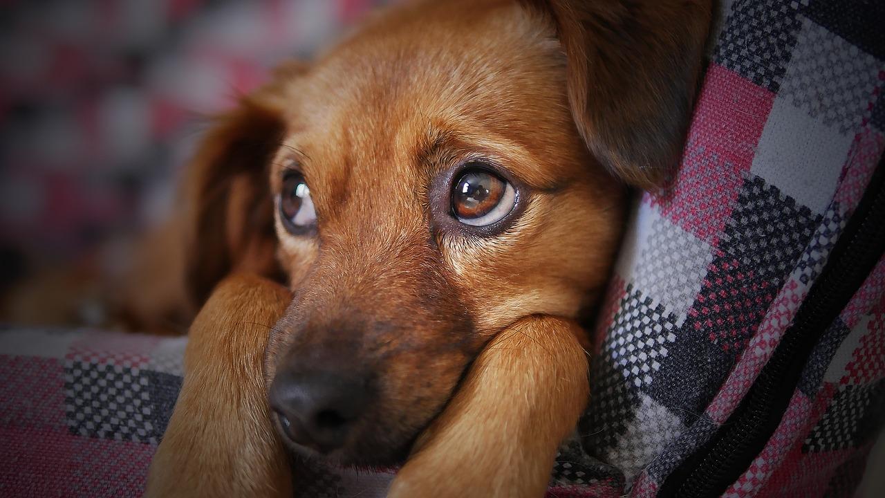 犬猫の外耳炎について