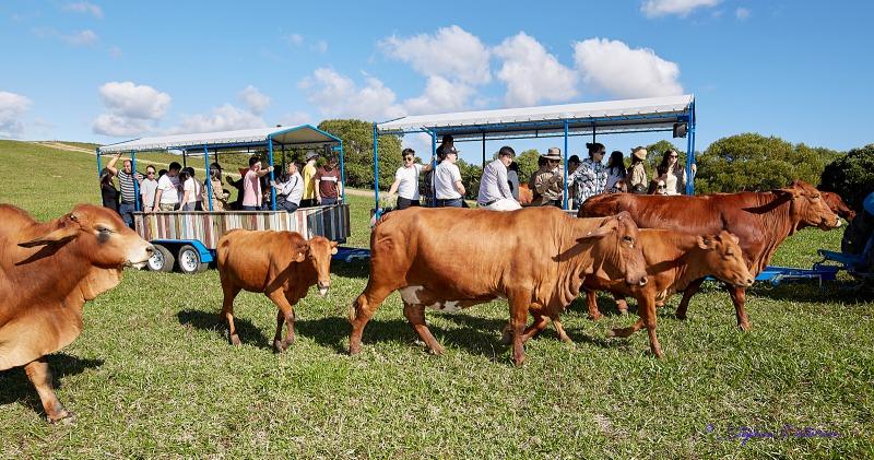 KUW-COW FARM BARNWELL